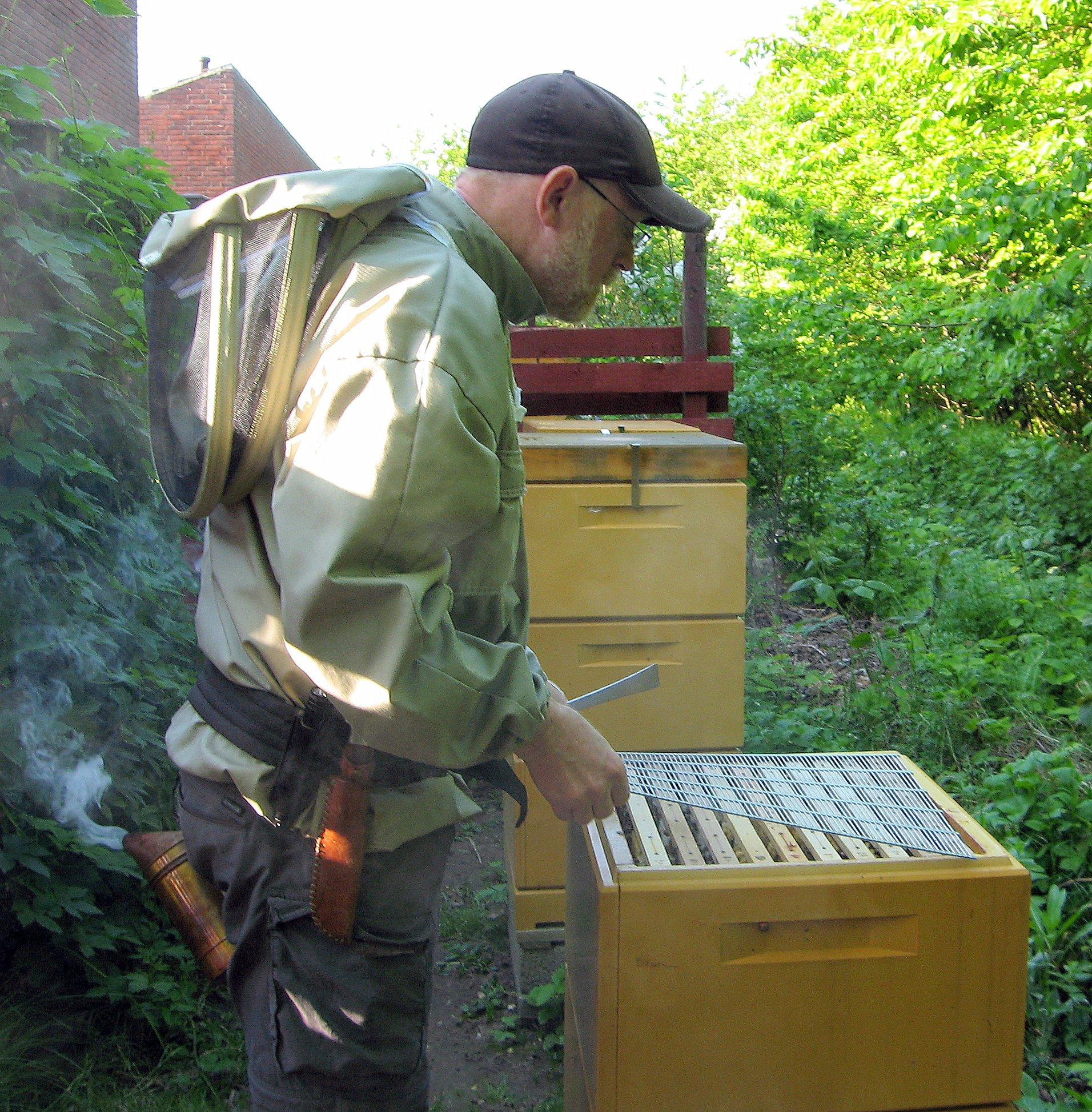 Maj 2012 Køer og bier 004