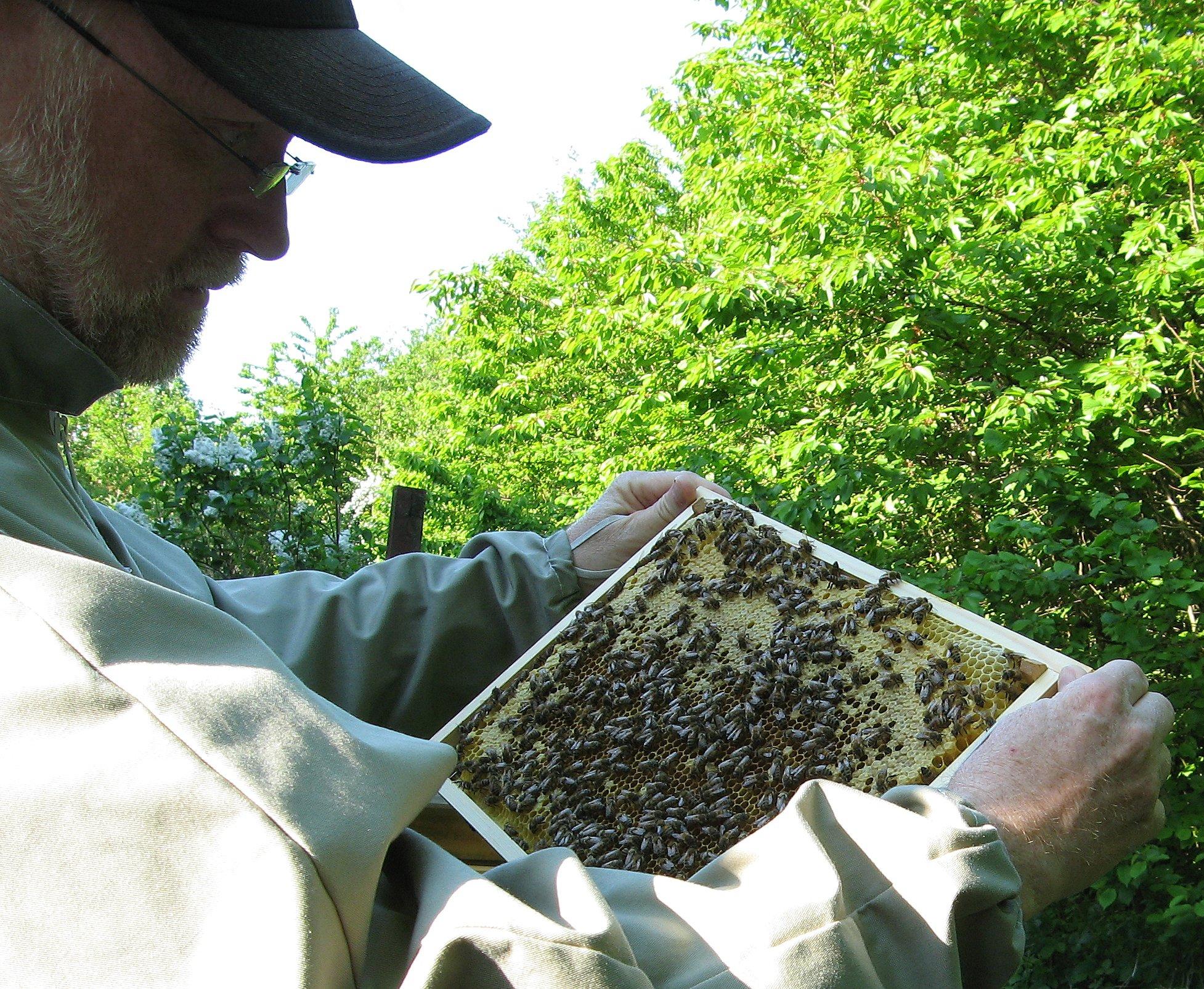 Maj 2012 Køer og bier 005